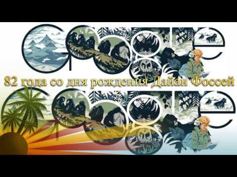 Дайан Фосси 82 года со дня рождения Google Doodle Dian Fossey