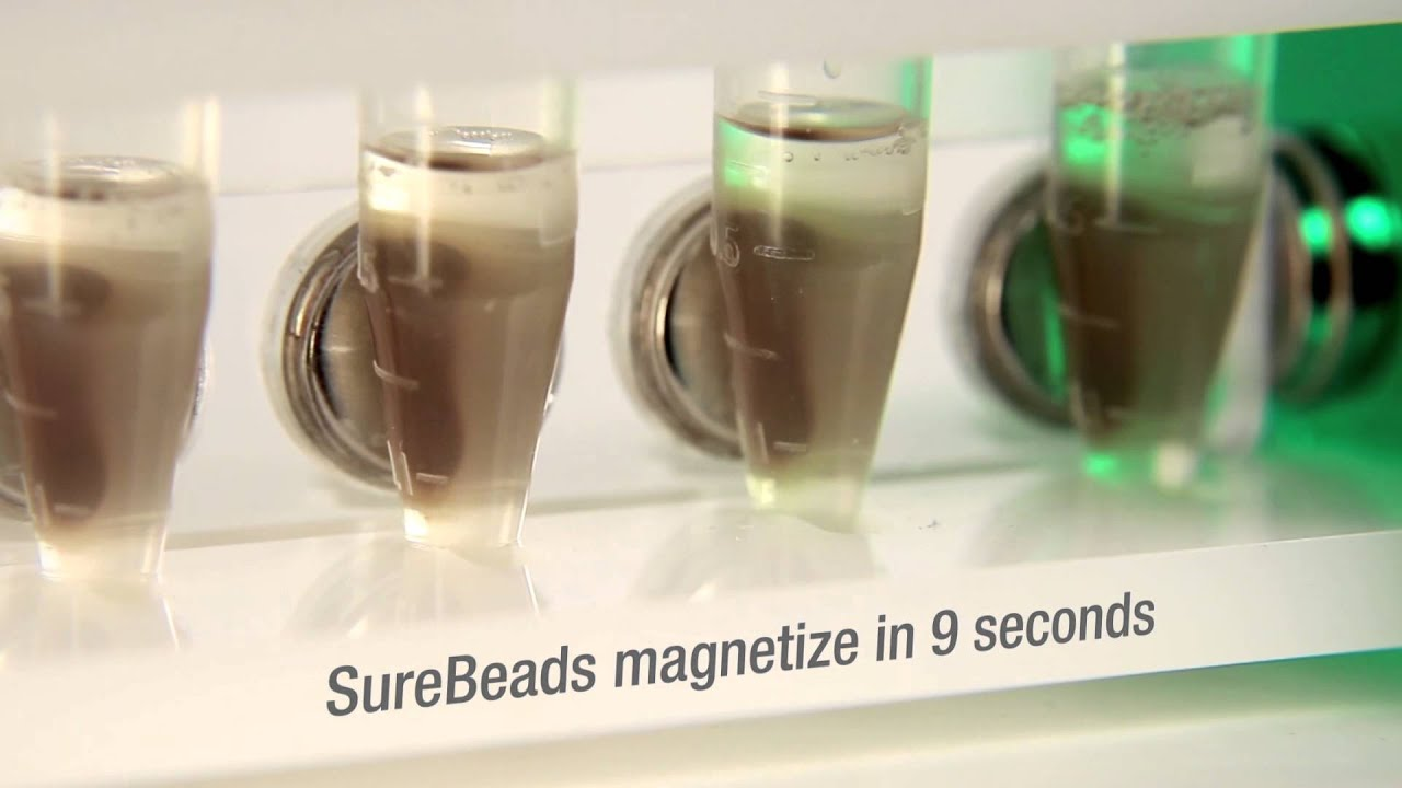 Surebeads Magnetic Bead System For Immunoprecipitation