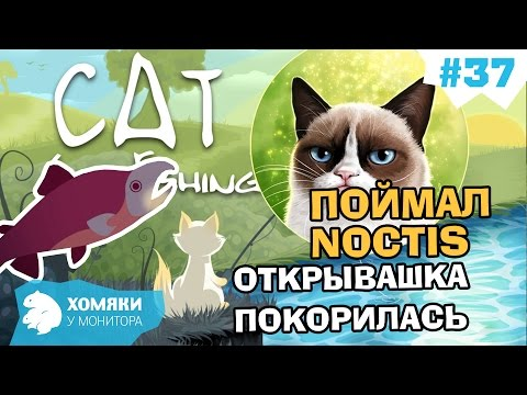 ловить кошку сонник