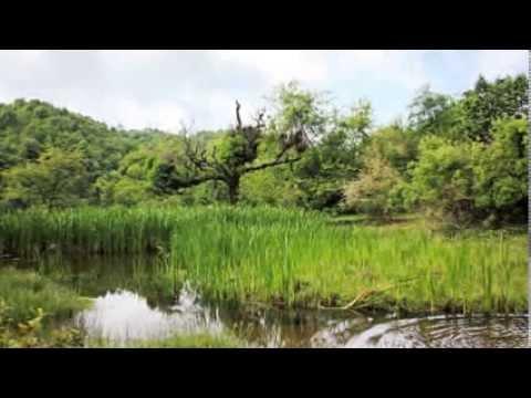 Nepali Folk tune on Flute (Bansuri)