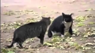 XxX=Cat_Fight=XxX.exe
