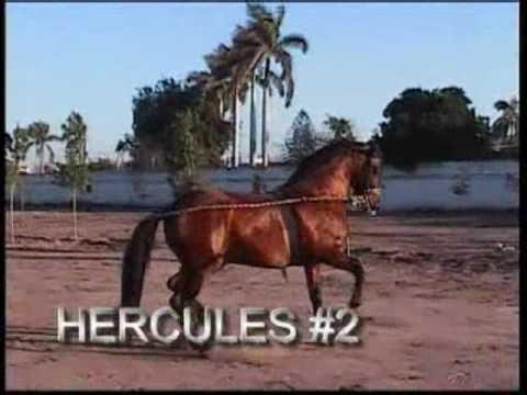 CABALLOS BAILADORES OBREGON
