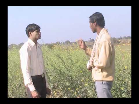 Improved Method for Brown Mustard Seed Cultivation Hindi Access Madhyapradesh