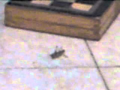 The Way To Kill A Grasshopper