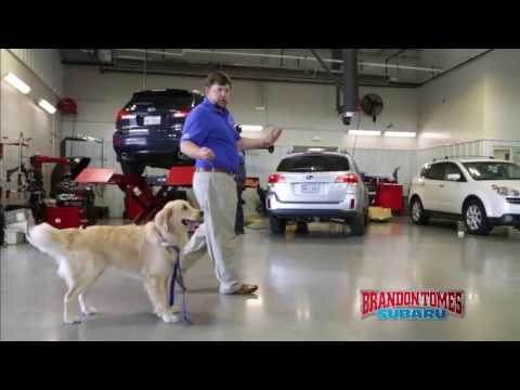 Do you need your vehicle serviced? Well, you're barking up the right tree! The Service Department at Brandon Tomes Subaru in McKinney is equipped for all your service needs. Come by and let...
