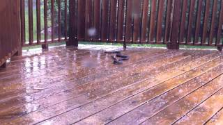 Pissed off hail storm snake (watch in 720p HD)