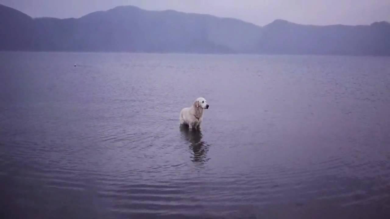 sari1030 本栖湖の白ネッシー - YouTube