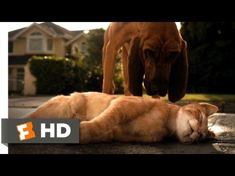 Cats & Dogs (1/10) Movie CLIP - Catnapped (2001) HD thumbnail