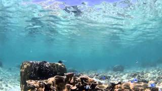 沖縄 シュノーケリング 大度海岸 Point G snorkeling underwater video odo beach  at Okinawa island