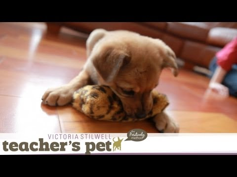 Teach a Puppy to Sit   Teacher's Pet With Victoria Stilwell