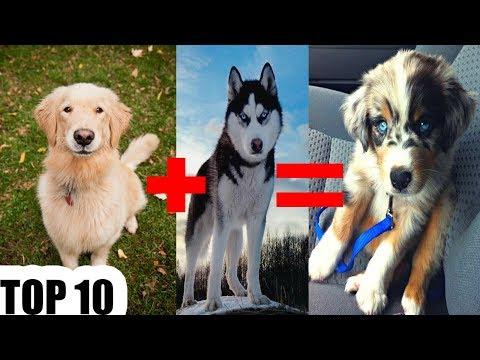 Топ 10 Най-сладките смески кучета