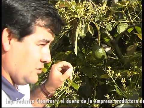 Cultivo de Aguacate - PART II - BIOMA - GEOLIFE SYSTEM - CARPOS