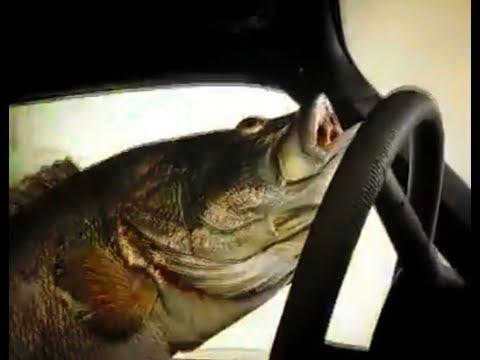 РЫБА ЛИХАЧИТ ЗА РУЛЕМ ! ЛУЧШИЕ ПРИКОЛЫ НА РЫБАЛКЕ ! Хитрая рыбалка 2018 Ты не поверишь