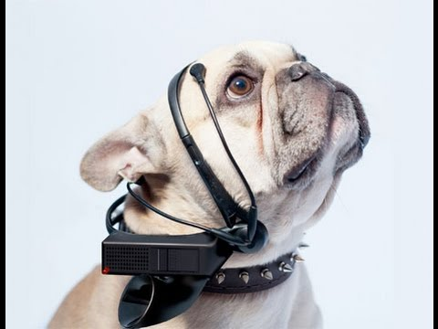 7 WILDEST Futuristic Pet Tech that you MUST OWN ▶ STRAIGHT FROM THE FUTURE