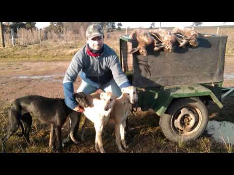 Galgos y Liebres 2012 Parte 1