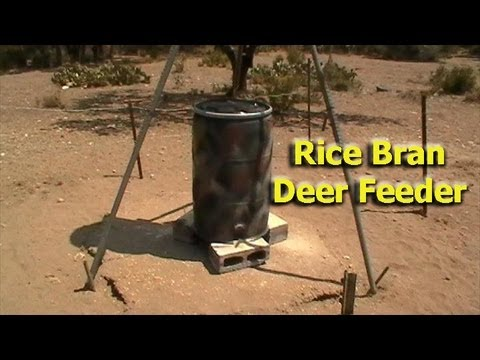 Rice Bran Deer Feeder Design (not good if you have hogs)