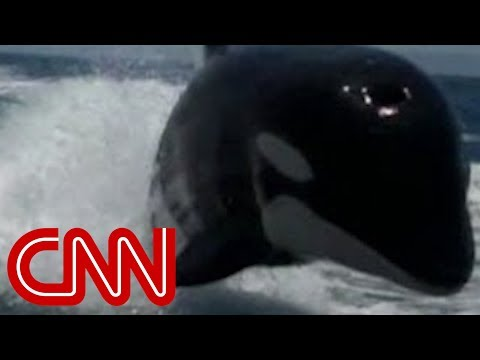 Killer Whales Surprise Couple On Boat video