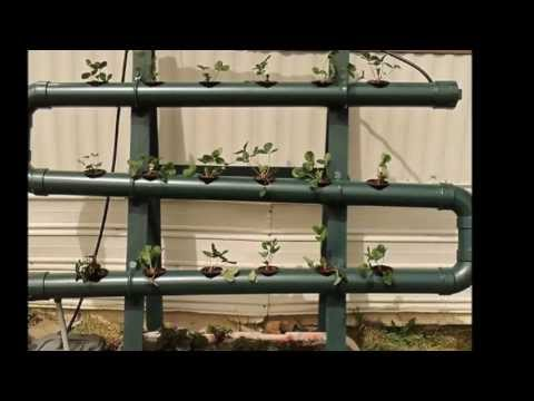 How to grow Strawberries in Hydroponics. Tips #1 2013