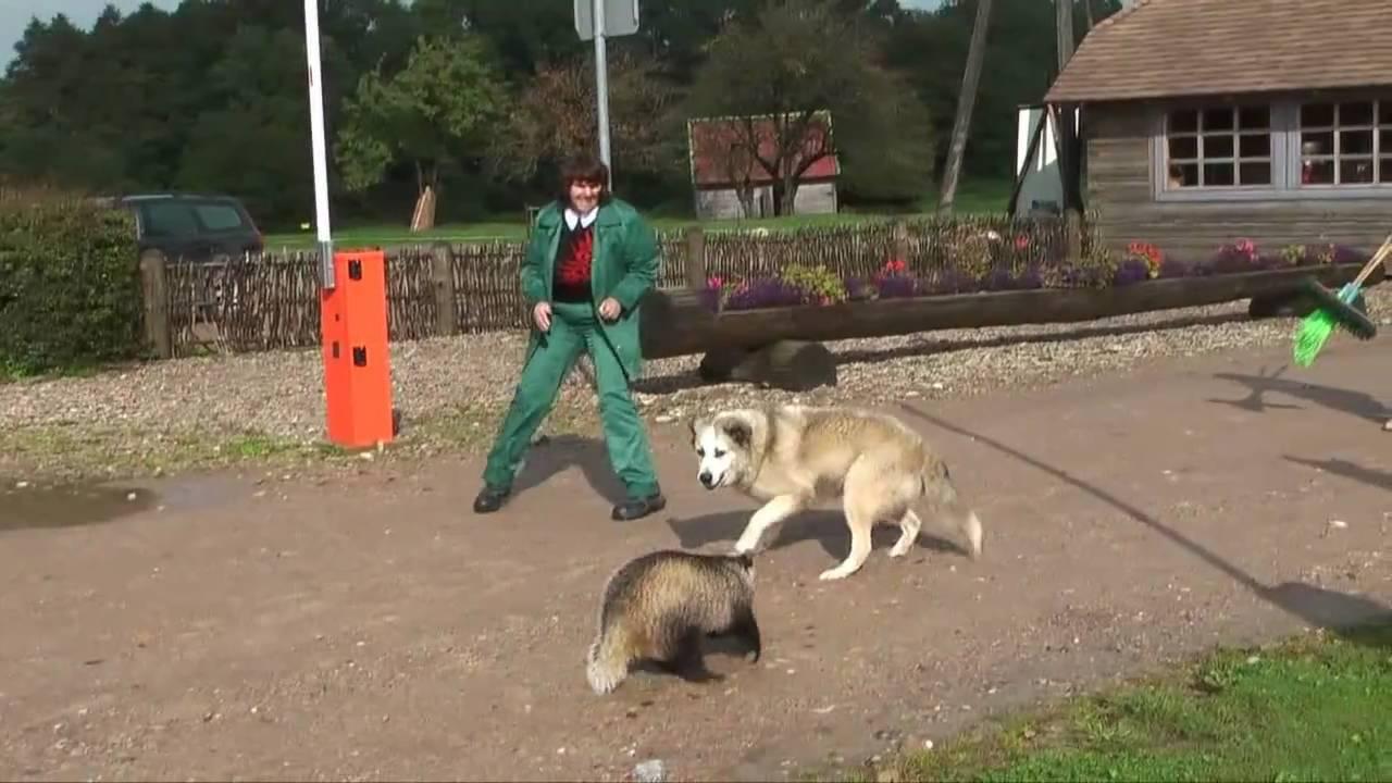 Badger Bites Dog