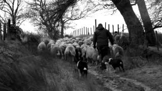 James Rebanks on The Shepherd's Life