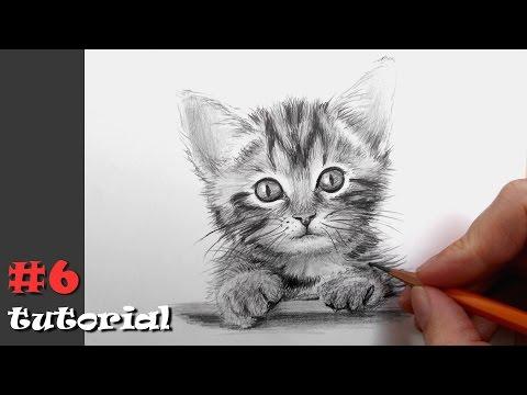 Как нарисовать кота карандашом - подробный обучающий урок.
