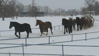 雪煙を上げ 馬追い運動