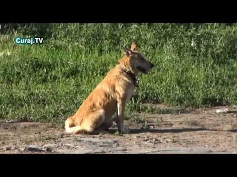 Viaţă canină la Durleşti