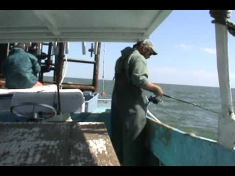 COMMERCIAL FISHING FOR SHEEPSHEAD WITH CANE POLES AND ROD AND REEL