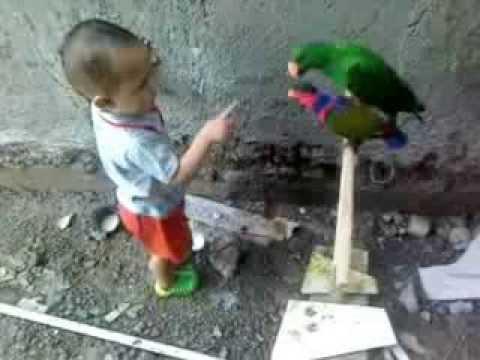 Burung Nuri Lucu Jinak Manja video