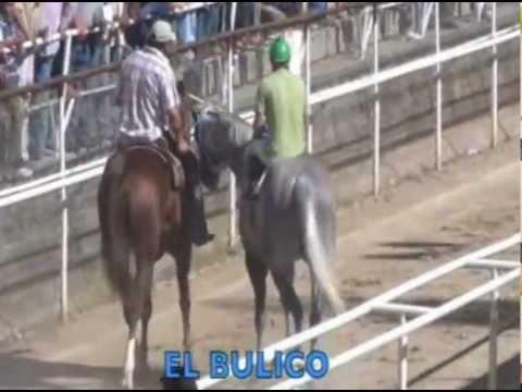 EL BULICO VS EL D9