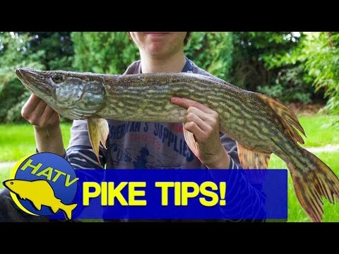 Pike Fishing Tips For Beginners - with Tom and Oscar - Tom and Henry Fishing