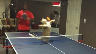 """""""Cats Playing Ping Pong Compilation"""" 