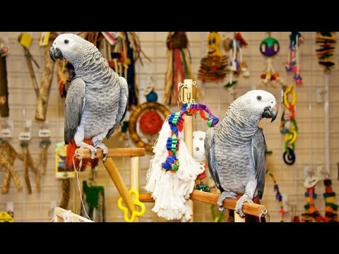Does a Parrot Make a Good Pet? | Pet Bird