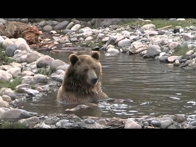 Jake, Maggi  Brutus the Bear