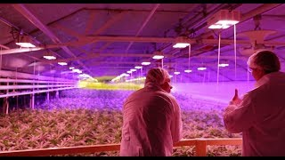 APHQF $7.61 April 10, 2018 Aphria Inc. Leamington Cannabis Grow Operations