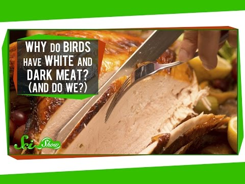 Why Do Birds Have White And Dark Meat? (And Do We?) klip izle