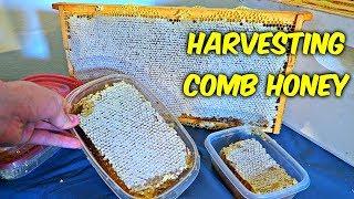 Harvest Honey - Part 3