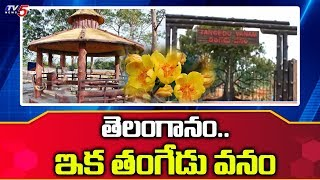 Telangana Forest Dept to develop 16 forest Clusters as  Urban lung spaces in Hyderabad   TV5