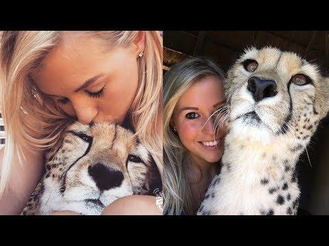 Она спасла котенка гепарда от охотников за трофеями, и он стал её лучшим другом