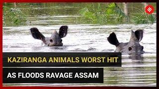Kaziranga animals worst hit as floods ravage Assam
