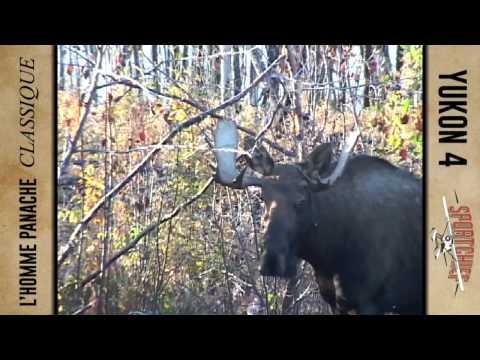 l'Homme Panache classique -Yukon 4 -Part 2