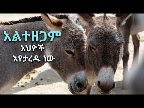 BBN Daily Ethiopian News August 1, 2017