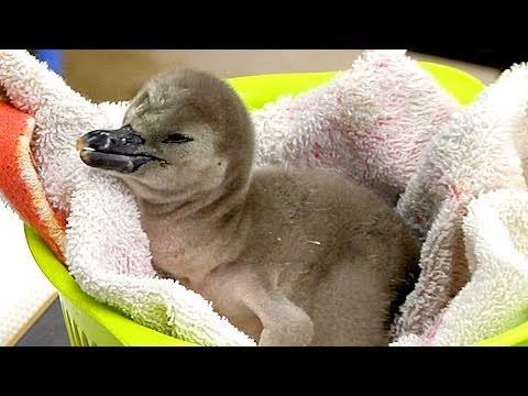 赤ちゃんペンギンの食事  - 埼玉県こども動物自然公園 -