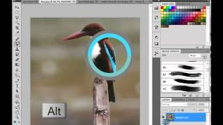Photoshop Cs5 Dersleri - Mixer Brush -