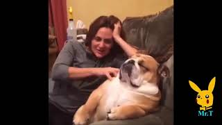 Funny Dogs   A Funny Dog Videos A MUST Watch!!