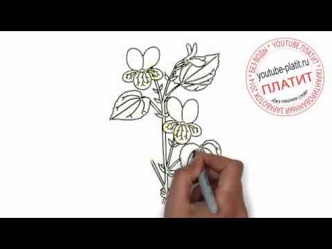 Как нарисовать красивую фуксию поэтапно карандашом