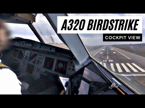 Airbus A320 - Birdstrike near 50ft - COCKPIT VIEW - Landing at Kiev - GoPro Pilot's View