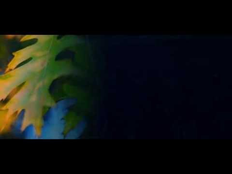 Ясени - Українська пісня