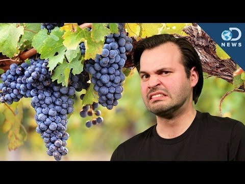 Wine Grapes Have Human Acne!