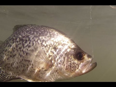 Spring Tactics for Crappie Fishing in Washington